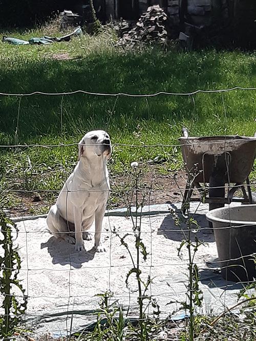 Hond Yellow inspecteert bouwvorderingen