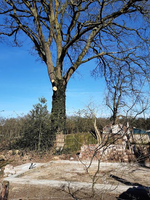 Huisje komt op mooiste plek voor de boom